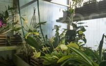 serra-orchidee